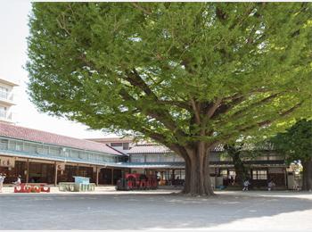 園庭の大きな木